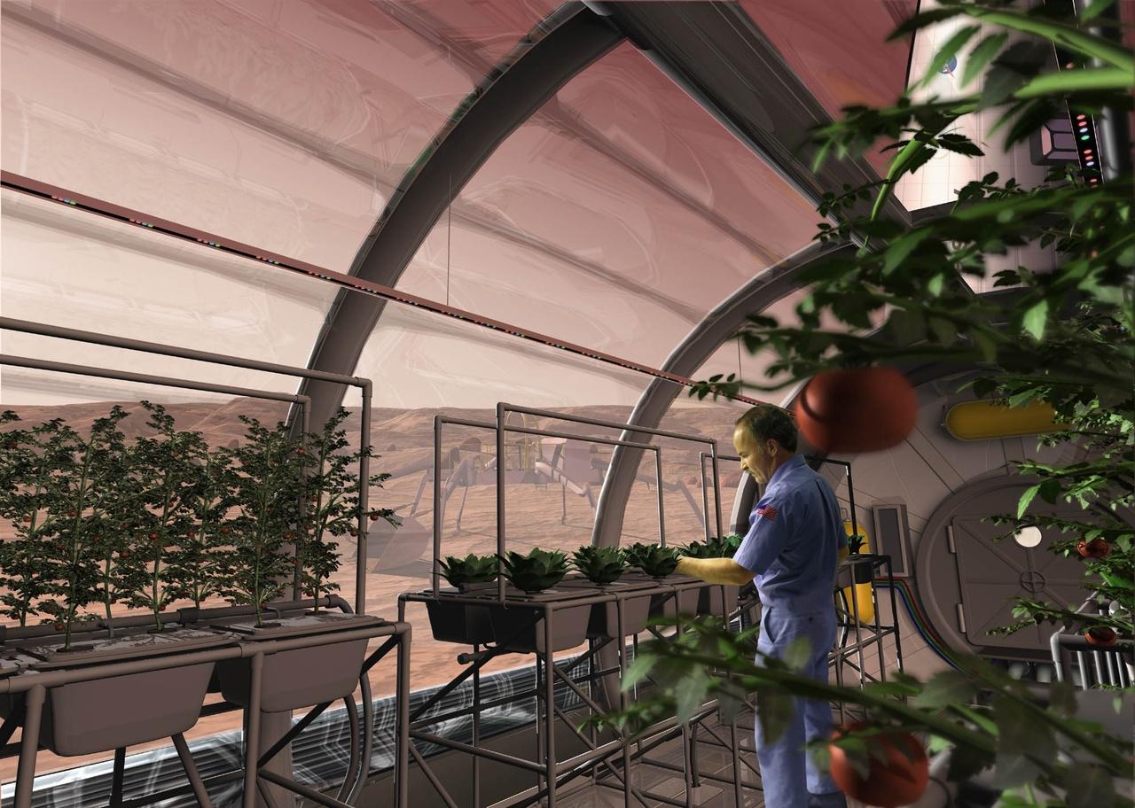 potatoes_in_space_greenhouse.jpg