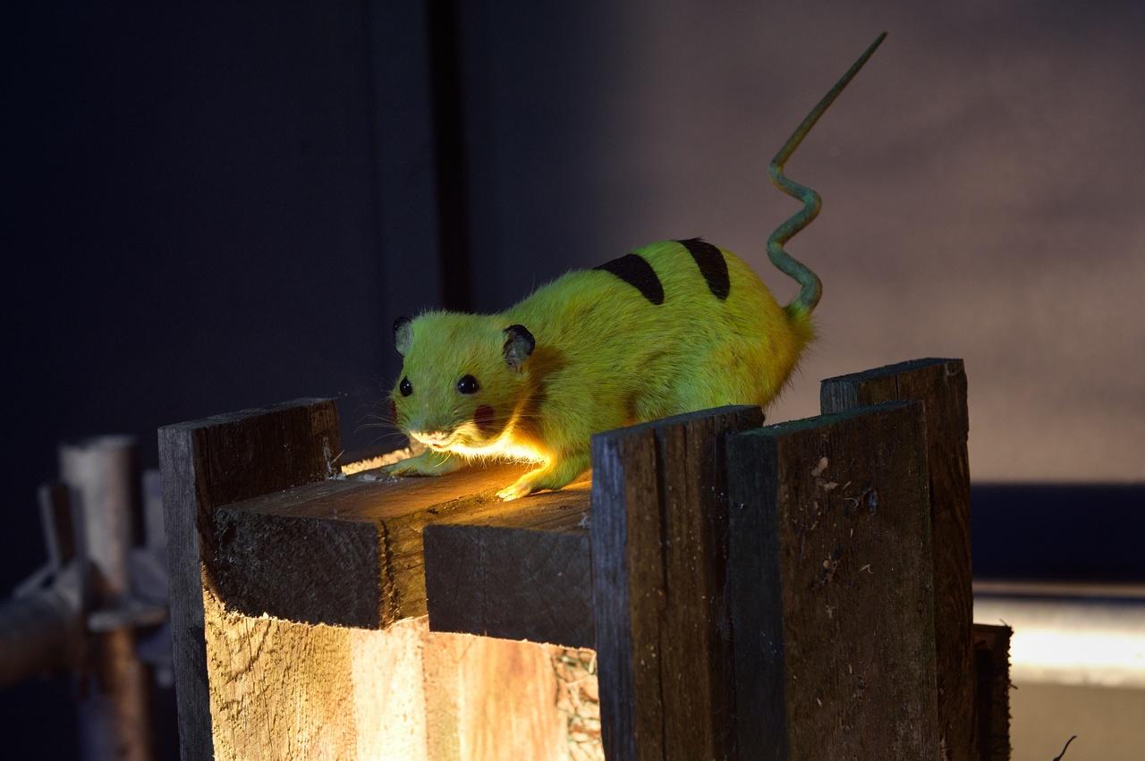 CHIM ↑ POM, Super Rat, 2006